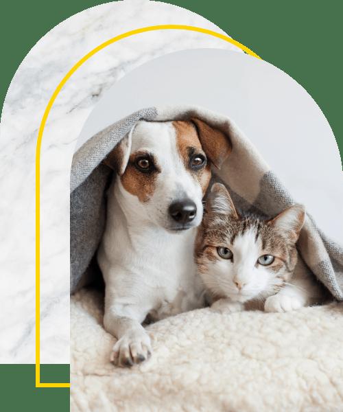 Dog hugs a cat under blanket